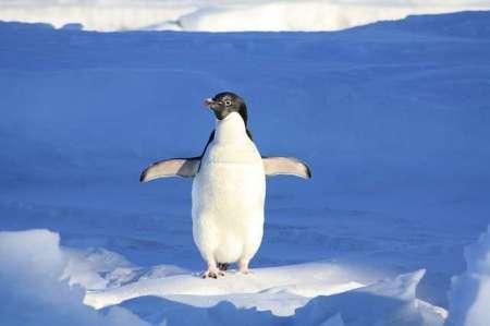 google-je-izbral-crno-belega-pingvina